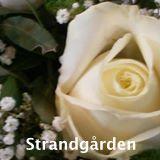 strandgaarden-rose